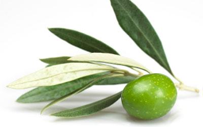 Varietal Extra Virgin Olive Oil